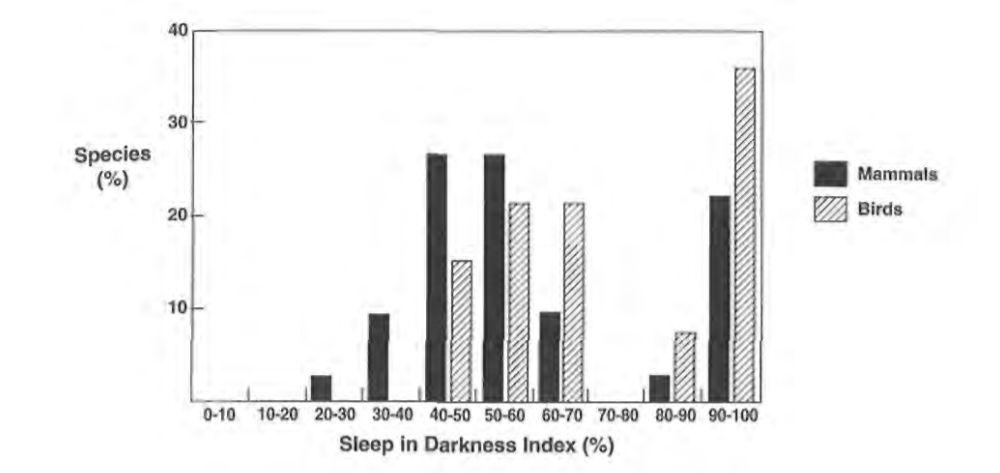 Nessun mammifero dorme tutta la notte, solo alcuni uccelli